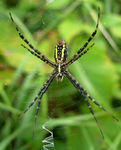 Title: Spider with Web Decoration