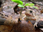 Title: The Gregarious Toad