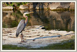 Title: My first heron
