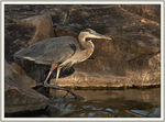 Title: Heron in the last rays of sun