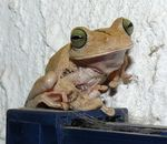 Title: A spectacting frog