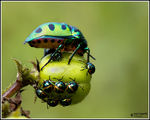 Title: Jewel Beetle with kids