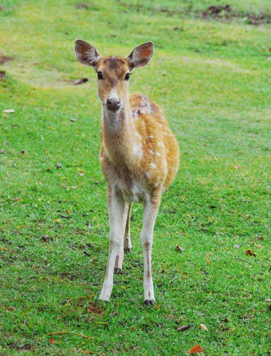 the deer of providencia essay review 301 moved permanently nginx/1120.