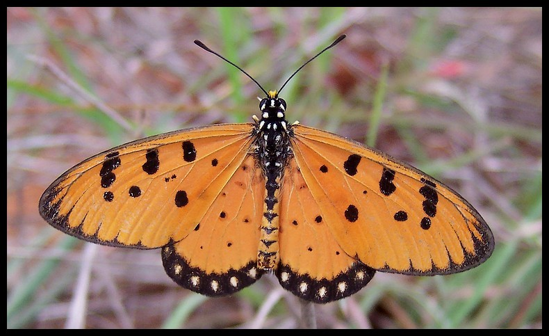 Butterfly - See my colours