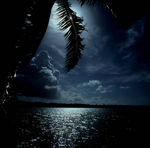 Title: palm leaf in front of moon