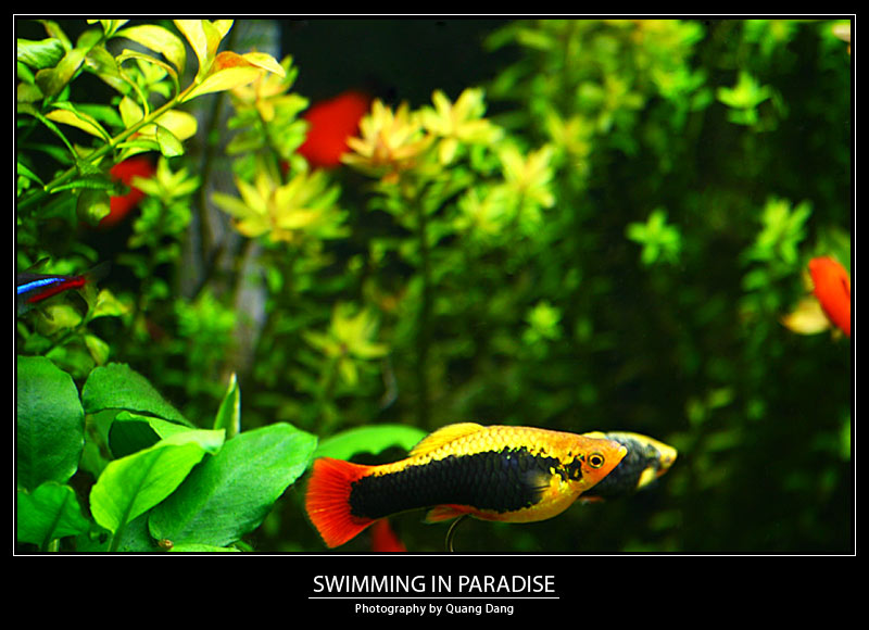 Swimming In Paradise