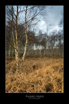 Title: Foxhall Heath