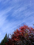 Title: Brushed skies in the Laurentians
