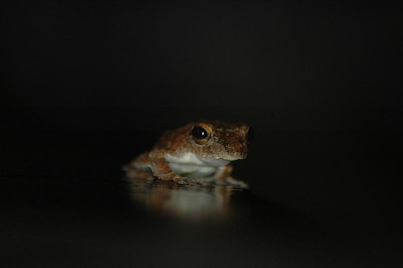 frog after rain
