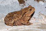 Title: toad