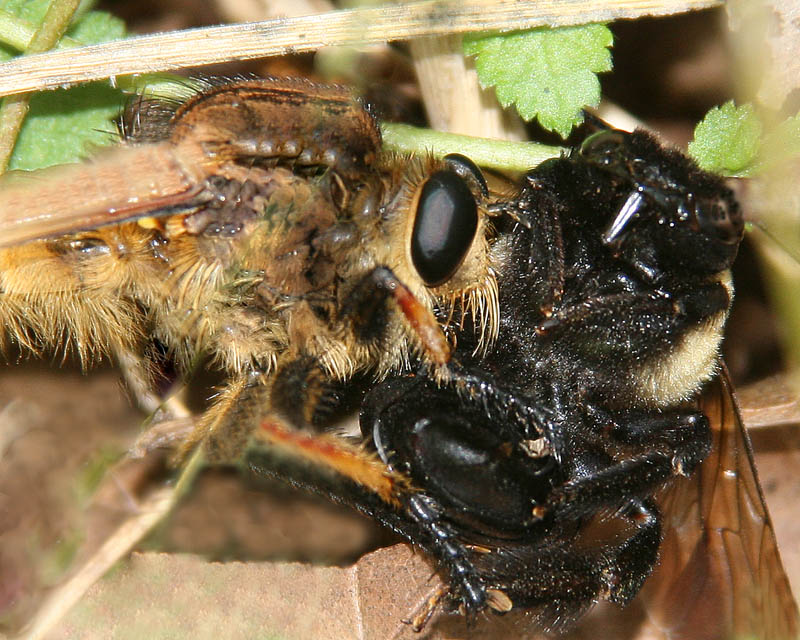 Death of a Bumblebee