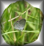 Title: Tiny Butterfly