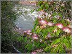 Title: *Flowers in the rain forest*