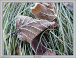Title: First Frost