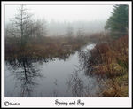 Title: Spring and Fog
