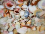 Title: collection of shells
