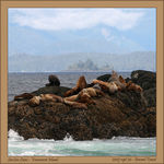 Title: Sea Lions on the rocks