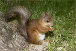 Title: Squirrel and a nut