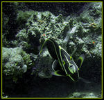 Title: The Angel FishSONY Cibershot DSC W200