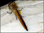 Title: dragonfly with alien fingers
