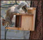 Title: A Squirrel's Cookie Jar