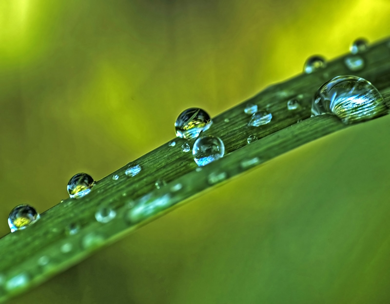 Drops after of the  rain