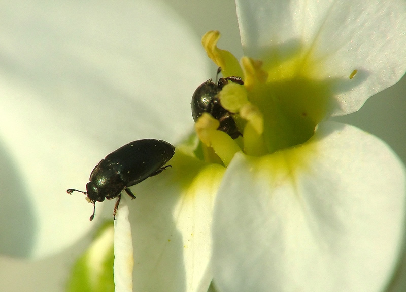 Insects in flower