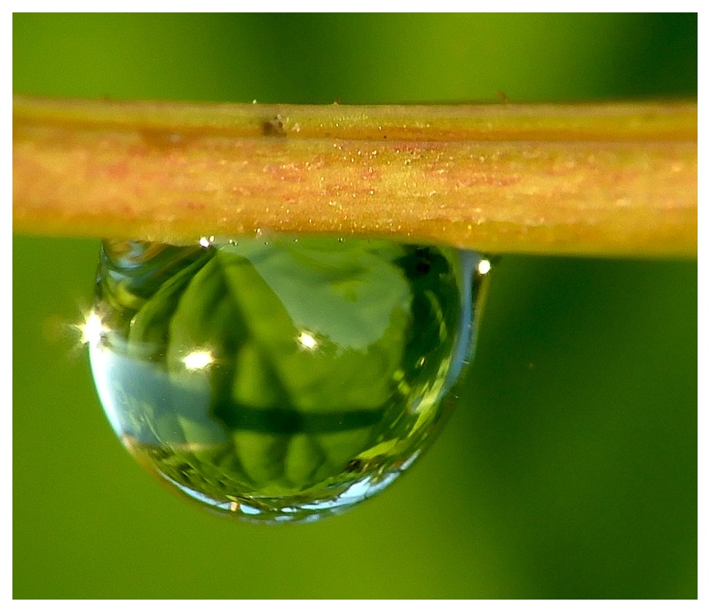 Nature in drop