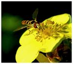 Title: Insect & flower