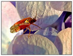 Title: Insect & flowers