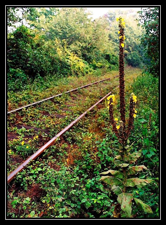 Nature by railway-track.