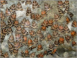 Title: A carpet of moths