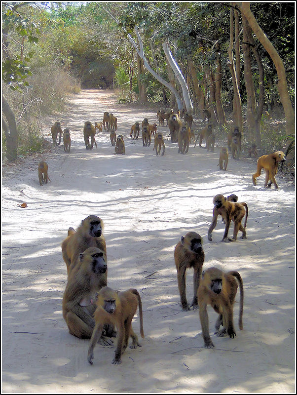 The road of monkeys