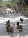 Title: The road of monkeys