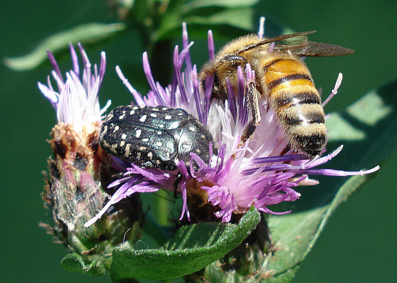 bee and friend