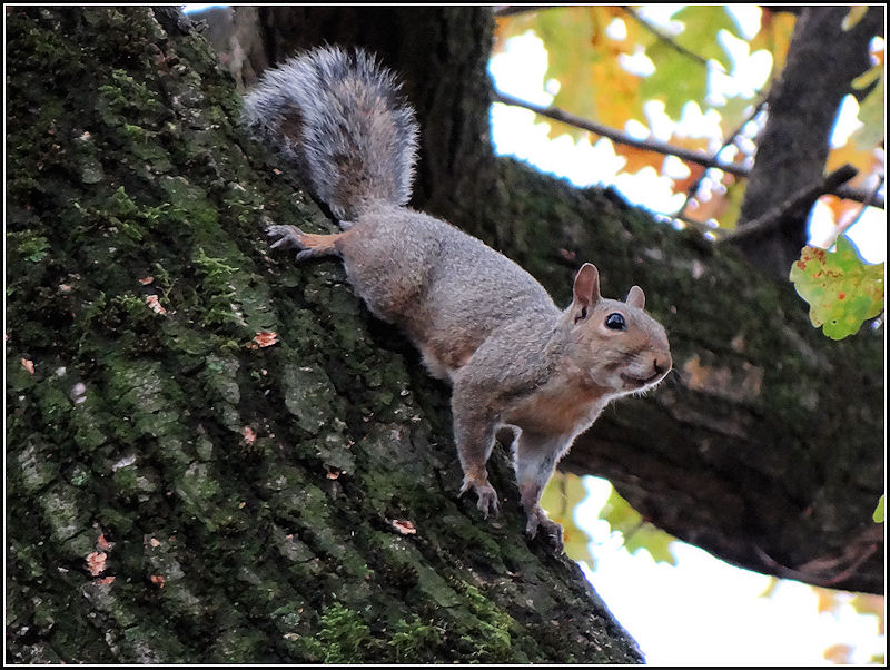 Ishi's squirrel steals my nuts