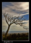Title: lonely tree