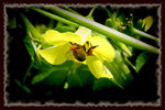 Title: flower and bee