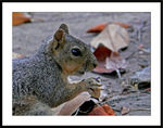 Title: Eating A Nut