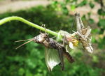 Title: one moment of Grasshopper