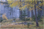 Title: Larches in the fog