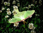 Title: Green ButterflyCanon PowerShot A710 IS