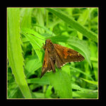 Title: Nignt butterflyCanon PowerShot A710 IS
