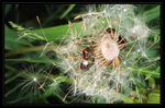 Title: Beetles in Dandelion