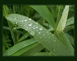 Title: Morning dew