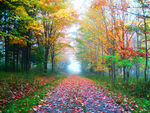 Title: Colorful trail