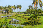 Title: Cuban country side