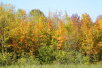 Title: Fall Colors - 2010 - 6