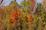Title: Fall Colors - 2010 - 2