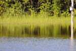 Title: Reflections on the water - 2011 - 1